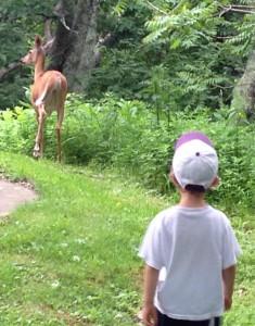 liam-deer